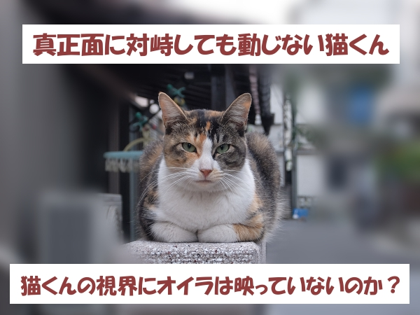 真正面に対峙しても動じない猫くん 猫くんの視界にオイラは映っていないのか?
