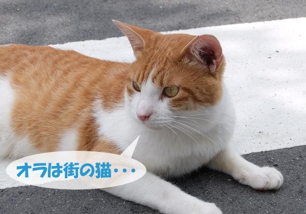 オラは街の猫・・・