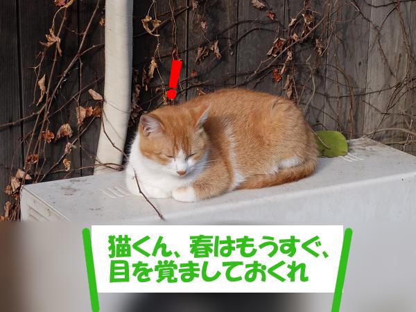 猫くん、春はもうすぐ、目を覚ましておくれ