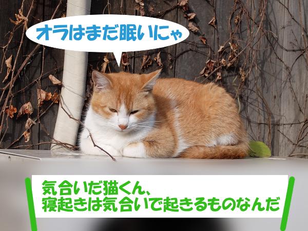 オラは眠いにゃ 「気合いだ猫くん、寝起きは気合いで起きるものなんだ」