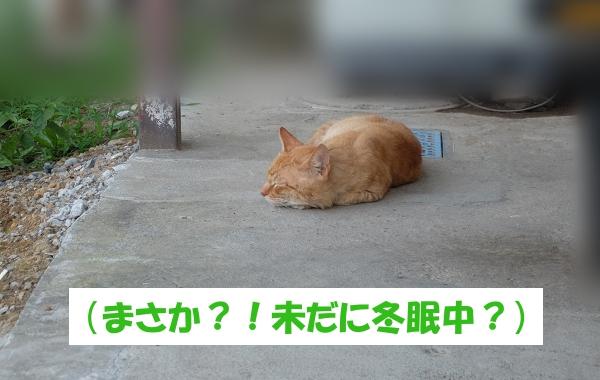 (まさか?!未だに冬眠中?)