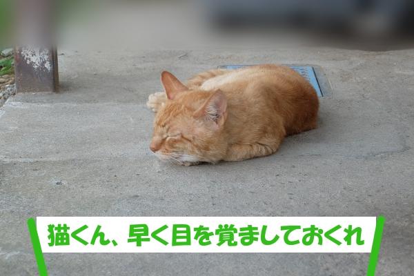 「猫くん、早く目を覚ましておくれ」