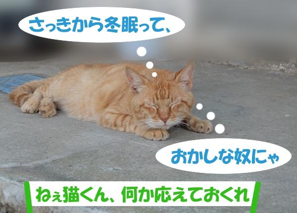 さっきから冬眠って、おかしな奴にゃ 「ねぇ猫くん、何か応えておくれ」