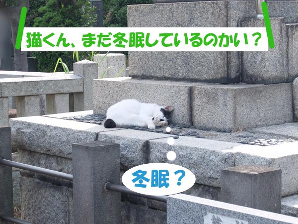 「猫くん、まだ冬眠しているのかい?」 冬眠?