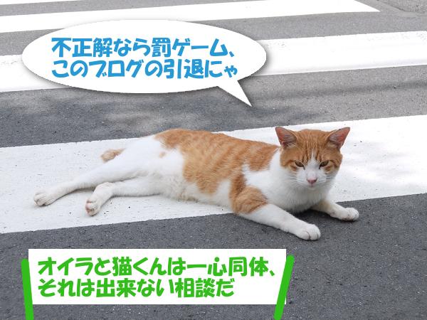 不正解なら罰ゲーム。このブログの引退にゃ 「オイラと猫くんは一心同体、それは出来ない相談だ」