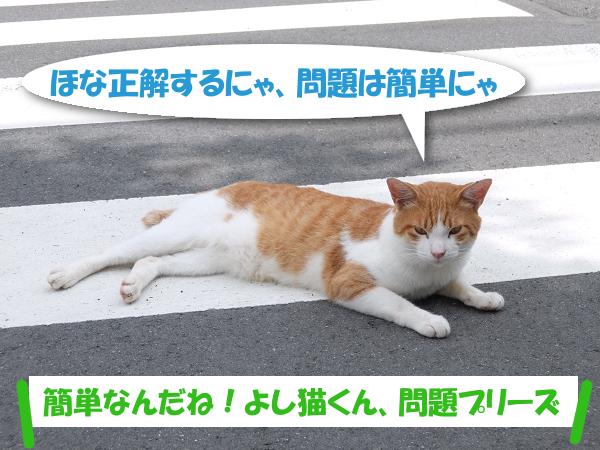 ほな正解するにゃ、問題は簡単にゃ 「簡単なんだね!よし猫くん、問題プリーズ」
