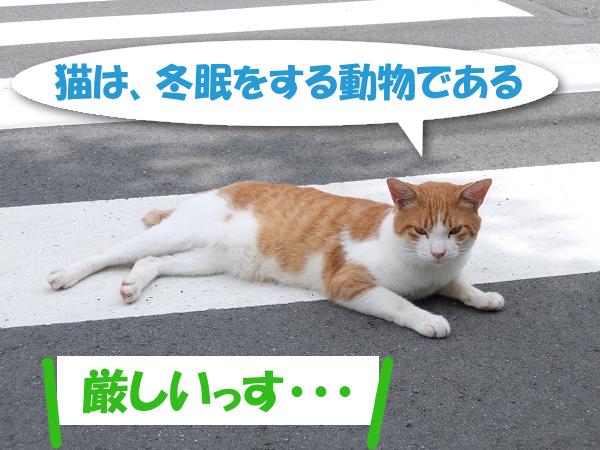 猫は、冬眠をする動物である。 「厳しいっす・・・」