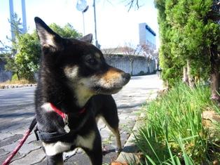 茶々・名古屋ウィメンズマラソン 2015