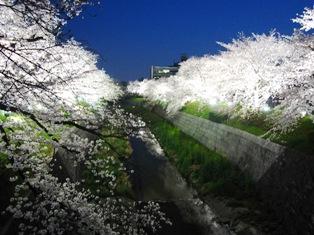 山崎川2015