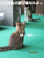 blog150614_2.jpg