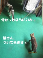 blog150614_4.jpg