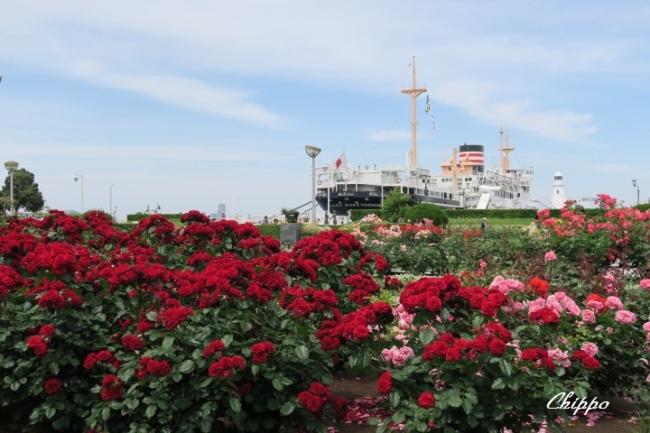 薔薇を航る