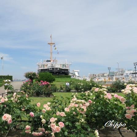 薔薇を航る4
