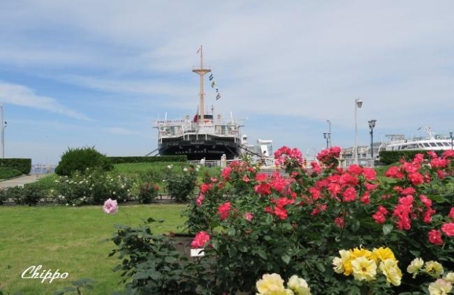 薔薇を航る3