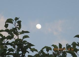 リンゴ園に月昇る