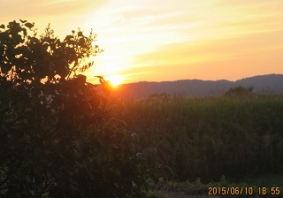 里山の稜線