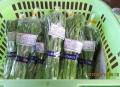 茎ブロッコリー出荷