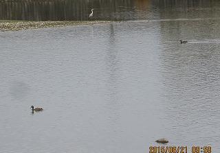 水面・水鳥