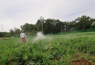 有機液肥の散布