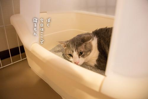 またトイレ。