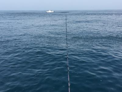 20150613イワシ大漁