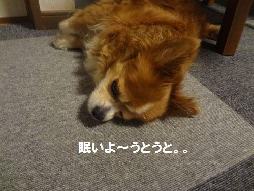 眠たいチョコ