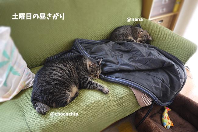 猫は睡眠導入剤