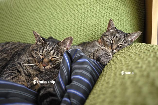 猫写真のアテレコは正しいのか