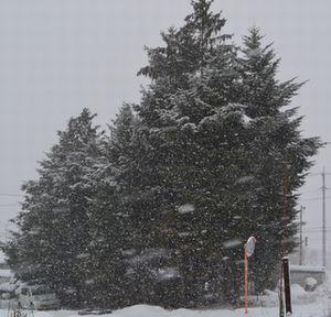 006吹雪