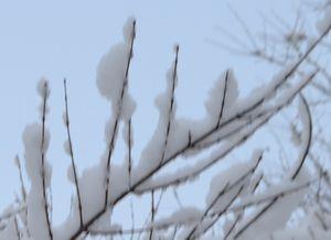 007雪の花2