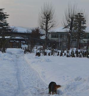 001バラ公園