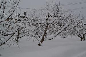 005雪のりんご畑