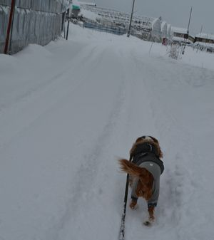 002雪道1