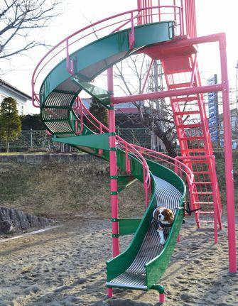 017バラ公園4