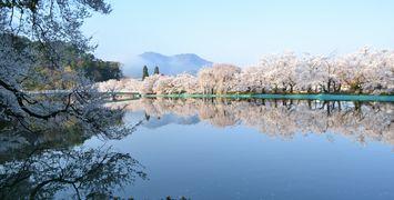 032臥竜公園桜1