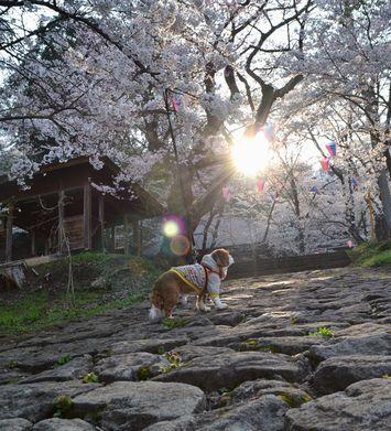 021桜坂