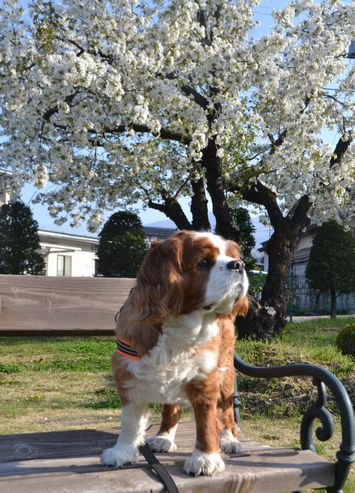 001葉桜