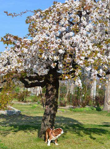 004葉桜