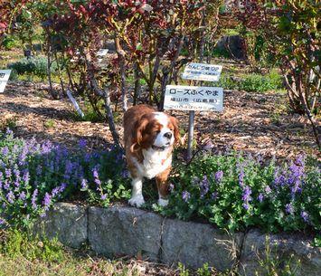 004バラ公園花壇