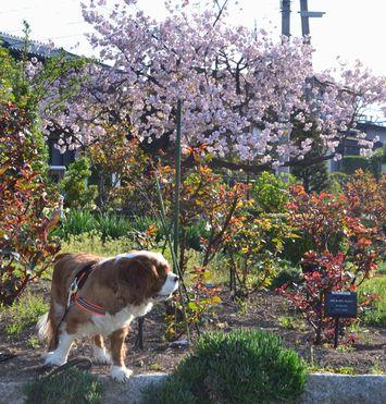 006バラ公園花壇