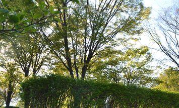 014新緑北公園