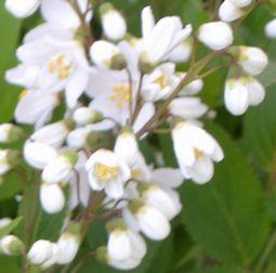016白い花