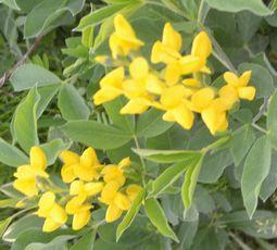 001黄色の花