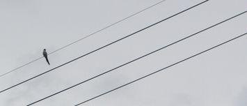 014電線