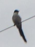 014鳥1