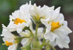 002野菜の花