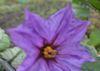 015野菜の花