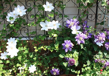 2015May10_garden3.jpg