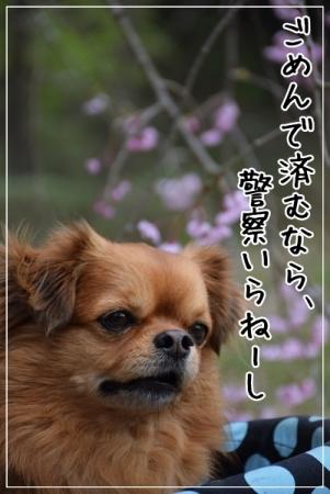 DSC_0566 (3)