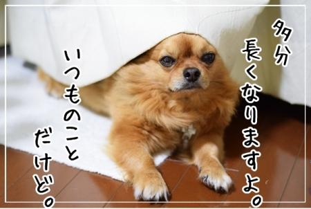 DSC_0144 (7)